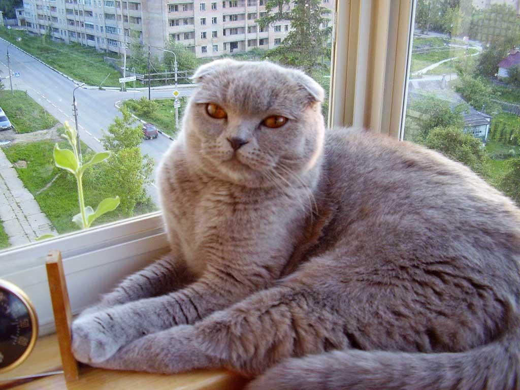 Ариша на любимом окне