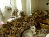 Слева направо: Бася, Ариша, Бриша